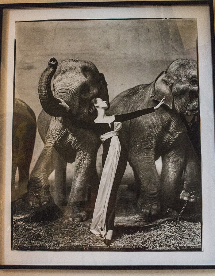 <h4> In the Leland Hirsch Private Collection<br><strong>RICHARD AVEDON</strong><br><em>Dovima with Elephants</em><br>1955<br>Edition of 50, printer later<br>Gelatin silver print<br>49 x 40 inches</h4>